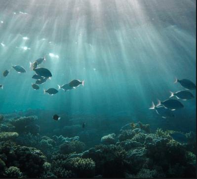 Examen d'installations de pisciculture drone Inspection - Intervention - location Robots sous marin